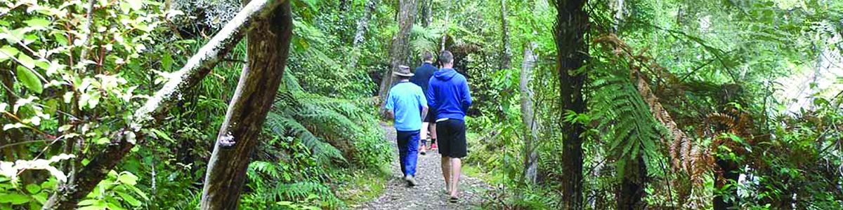 walking-on-bush-track